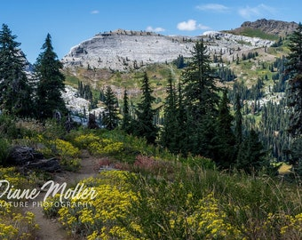 Marble Mountains,Spring Flowers,photo,California,Travelers,Yellow,Nature Photography,Fine Art Print,Canvas,Metal Art,Wall Art,Archival Inks