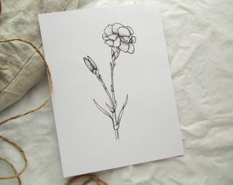 Carnation Flower Illustration Giclee Print
