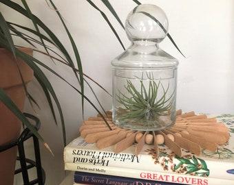 Mid Century Modern Apothecary Jar // Vintage Glass Apothecary Jar  // Vintage Cloche Jar