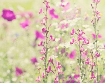 Fuchsia Wildflower Color Photo Print { green, sunshine, sunlight, bud, field, grass, tall, wall art, macro, nature & fine art photography }