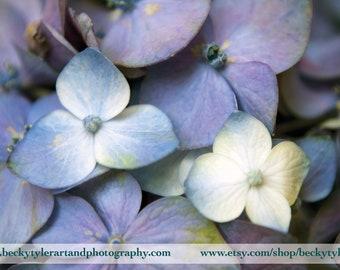 Hydrangea, Digital Photography, Fine Art Print Set