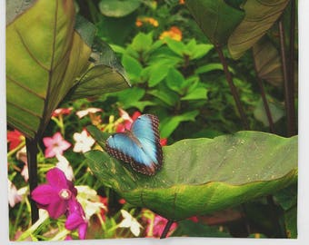 Butterfly Throw Blanket-Fleece Blanket-Girl's Room Decor-Warm Blanket-Coral Fleece Throw Blanket-Bed Throw Blanket-30x40/50x60/60x80/88x104