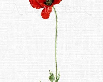 Red Flower Clipart 'Poppy Flower' Vintage Botanical Illustration Digital Download for Decals, Collages, Wall Art Prints, Scrapbook...
