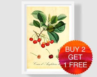 Cherry Art Print, Cherry Illustration, Cherry Home Decor, Cherry Poster, Antique Botanical Print, Cherry Wall Art, Cherry Kitchen Art