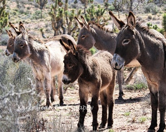 Band of Burros