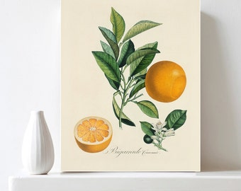 Orange Print Citrus Print Botanical Illustration Printable Antique Vintage Fruit Print Encyclopedia Print Kitchen Decor DIY Digital Download