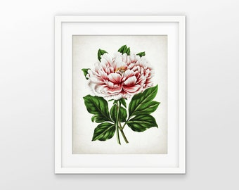 Pink Peony Art Print - Peony Art - Peony Decor - Peony Botanical Print - Peony Garden Flower Art - Single Print #1608 - INSTANT DOWNLOAD