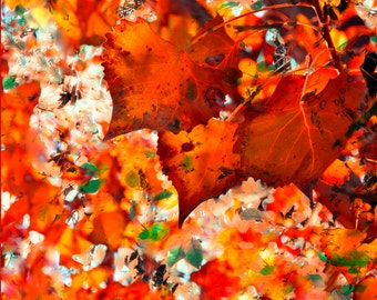 Autumn Leaves,Fall Colors,Landscapes,Giclee Print,Nature Prints,Red,Orange,Colorado Art,Photography,Nature Photography,Leaves,Leaf Prints,