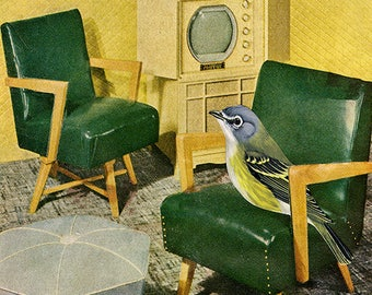 The solitary vireo. Limited edition print by Vivienne Strauss.