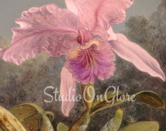 Vintage 1871  Pink Orchid. Single 8.5 x 11 image & png of gallery painting for Junk Journals, Scrapbooks, Decoupage, Card Making  #17073 v2