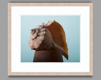 SEASHELL #4 - Framed Art Photography, Home Decor, Wall Art, Nature, beach, seashells, ocean