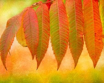 Leaf Print, Nature Print, Fall Leaves, Colorful Wall Art, Autumn Leaves, Leaf Art, Sumac Tree, Leaf Wall Art, Orange Art, Tree Print