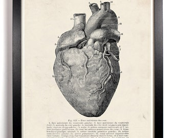 Human Heart Anatomy, Home, Kitchen, Nursery, Bath, Dorm, Office Decor, Wedding Gift, Housewarming Gift, Unique Holiday Gift, Wall Poster