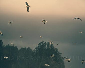 Digital download Birds in a storm Pacific ocean West coast fine art photography Seascape printable photography