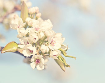Blossoms Color Photo Print { sunshine, sunlight, flower, white, bud, bloom, pink, tree, wall art, macro, nature & fine art photography }