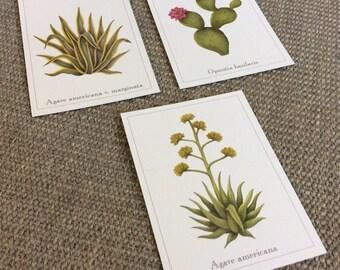 Arizona Desert Botanical Postcard Mix