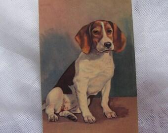 Vintage Beagle Hound Dog Postcard Artist Rendering Signed William Jorge by Alma Publishing Card Number 304 Unused - 9320