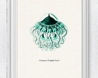 Jellyfish Peromedusae in sea foam color side view poster , sea life print-Marine sea life illustration A4 print SAS171