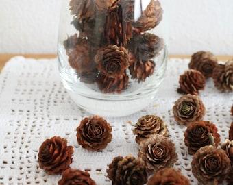 Natural Pine Cones, Mini Pine Cones, 50 TINY Pine Cones, Wooden Pine Cones