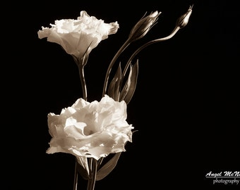 Flower photo Greeting Card, black white flower,  sepia flower, 5x7 greeting card, Blank inside, Fine art photography Card