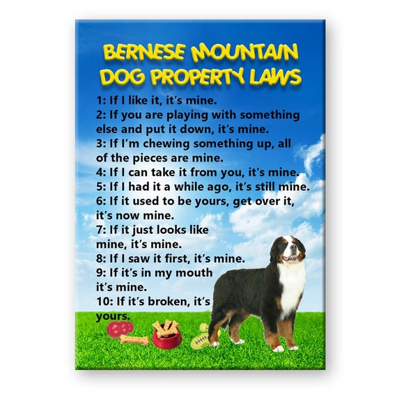 Bernese Mountain Dog Property Laws Funny Fridge Magnet