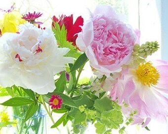 Peony Photograph,  Botantical Art Print,  Pink Flower Wall Decor, Still Life Photography, Bedroom Decor