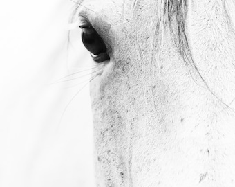 Horse Art Black and White Horse Photography