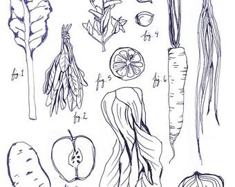 Botanical Illustration Art Print Vegetables - Herbs Legumes & Veggies, farmers market art print, kitchen art, chef gifts, cooking artwork