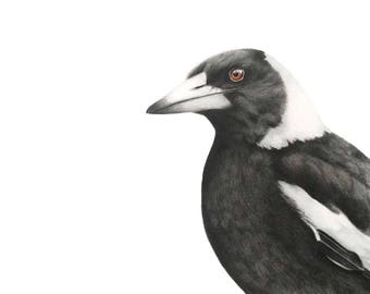 Australian Magpie Art Print - 5x7 - Magpie Art Print - Australian Bird Art Print