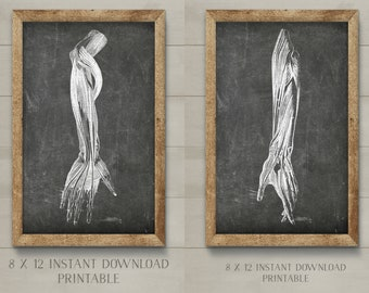 SET of 2: Doctor's Office Art, Anatomical Printables,Chalkboard Medical Illustrations,Arm Tendon Illustration,Orthopedic Art,Musculoskeletal