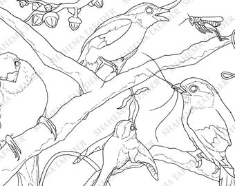 Beautiful Birds Adult Colouring Page