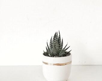 planter Terrarium ceramics garden home decor Handmade ceramic planter garden in white and gold succulent pot