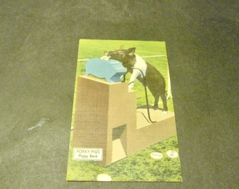 IQ Zoo Post Card- Porky Pig's Piggy Bank- rare 1966 Linen card- Hot Springs famous Zoo