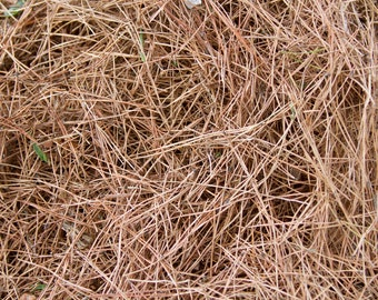 Pine needles dry, 1 gallon bag/ free ship USA baked to be insect free