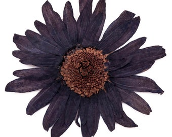 Pressed flowers, large navy daisy 10pcs for floral art, craft