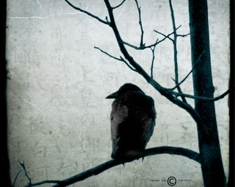 Blue Crow Tree Photograph--Black Crow Waiting--TTV Fine Art