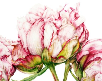 Botanical Print, Home Decor, Gift for Her, Peony Mothers Day Gift Watercolor Print, Botanical Art, Peony print, Flower Watercolor Painting