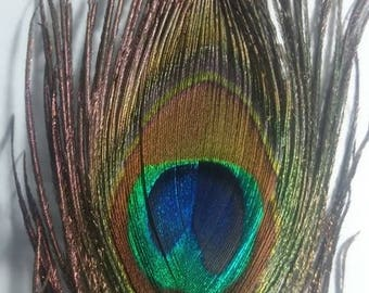 A beautiful green Peacock feather is turquoise reflection