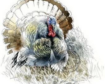 Wild Turkey watercolour - bird art, wildlife art - nature print of original artwork