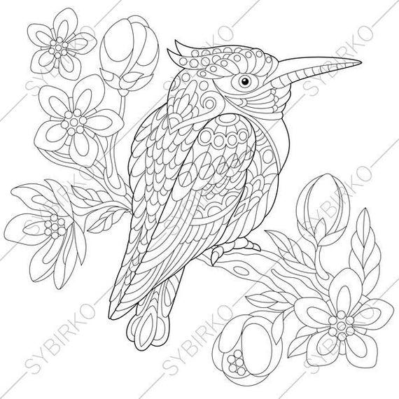 Superb Australian Kingfisher. Coloring Page. Animal