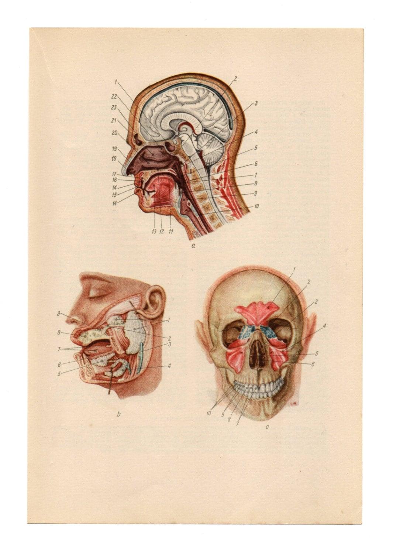 diagrama de la biología cuerpo humano cráneo anatomía