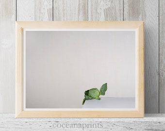 Vegetable photo, Still life photo, cabbage photo, green vegetable, minimalist art, contemporary photo, vegetable art print, white