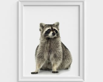 Raccoon Print, Nursery Decor, Nursery Wall Art, Nursery Printable, Raccoon Art, Printable Wall Art, Raccoon Photo, Animal print, Art print