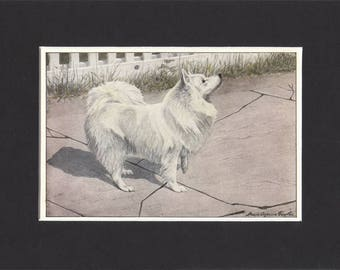 Spitz Print 1919 Vintage Dog Print by Louis Agassiz Fuertes Small Picture Mounted Spitz Dog Print Spitz Picture White Spitz Print
