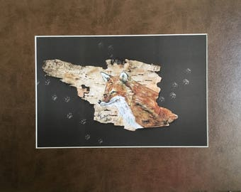 Special, Red Fox on birch bark print - matted in a med brown motted mat, matted size is 11 x 14