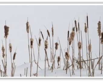 Iphone Case , Fine Art Photography, iPhone 4/4s, iPhone 5/5s, iPhone 6 Winter Cattails, New England Winter Scene