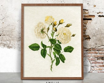 Botanical Rose Print Wall Art, Yellow Flower Illustration, Vintage, French Country Cottage, Shabby Chic Decor, Printable Digital Download