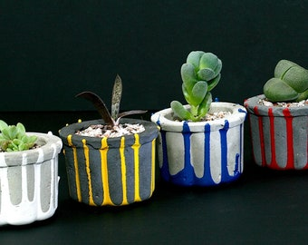 set of four mini concrete pots with succulent plants