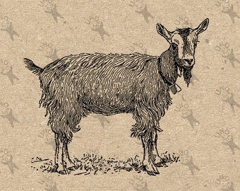 Vintage image Goat with bell Farm Country Black White Instant Download Digital printable retro drawing clipart graphic tote kitchen HQ300dpi