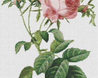 Rose Cross Stitch Chart, Rosa Centifolia Foliacea Cross Stitch Pattern PDF, Art Cross Stitch, Pierre-Joseph Redouté